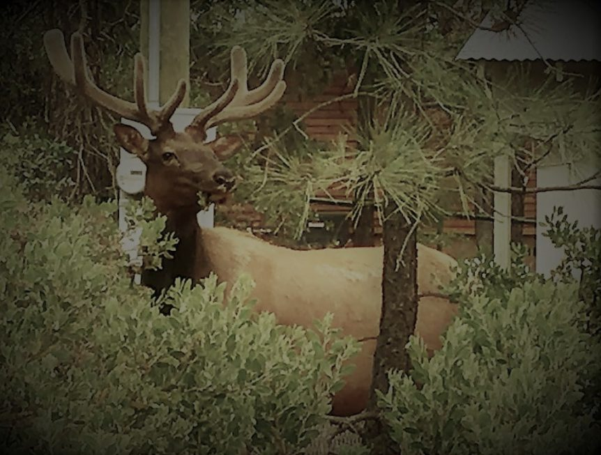 Best Binoculars for Elk Hunting in 2018