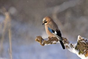 monoculars for bird watching