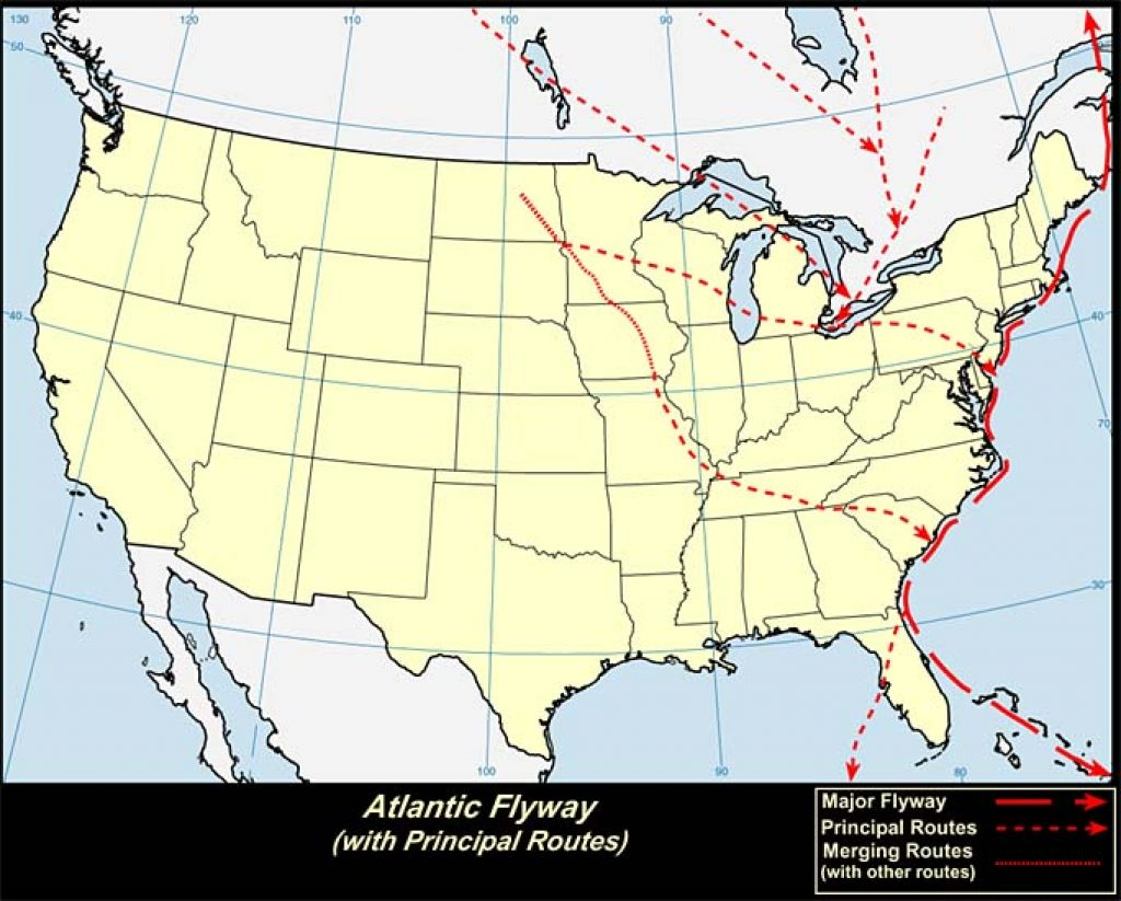 Atlantic Flyway (U.S.A.)-USGS photo