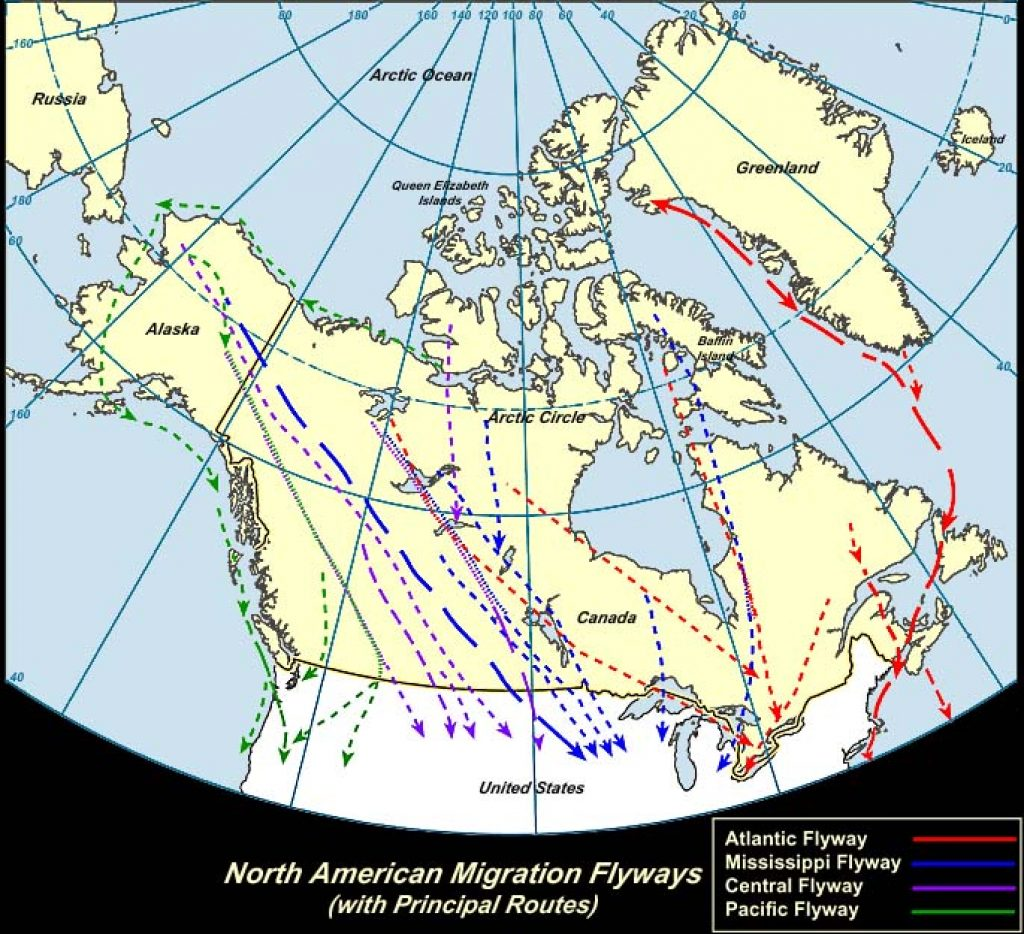 All Flyways (Canada)-USGS photo