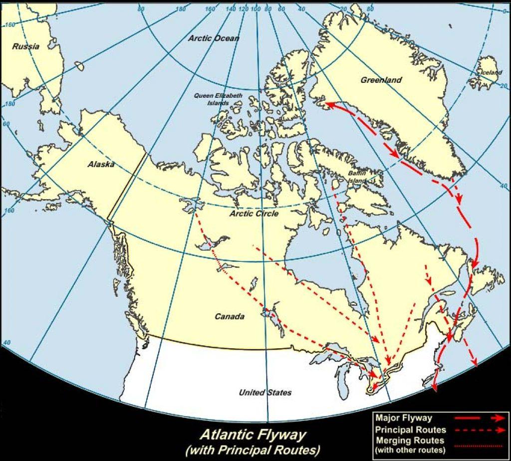Atlantic Flyway (Canada)-USGS photo