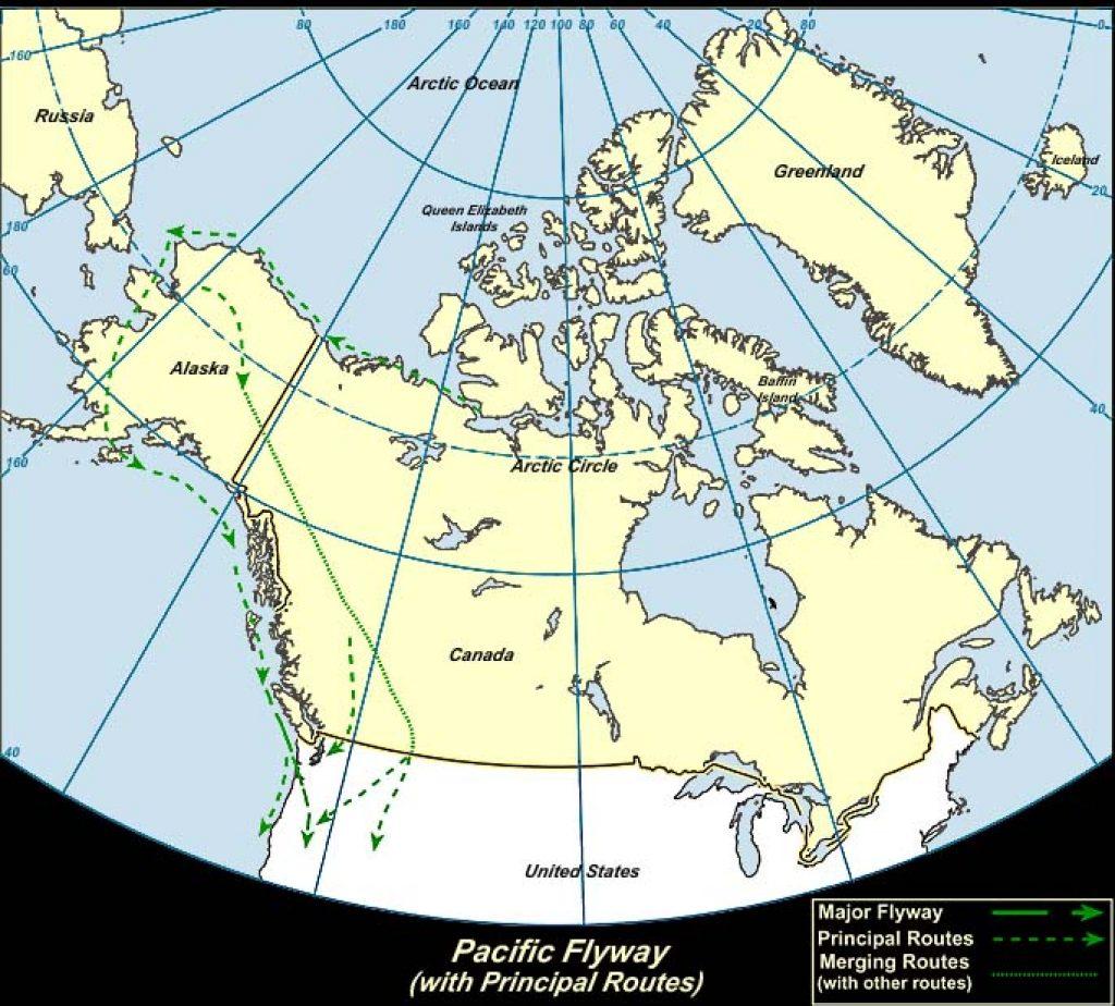 Pacific Flyway (Canada)-USGS photo
