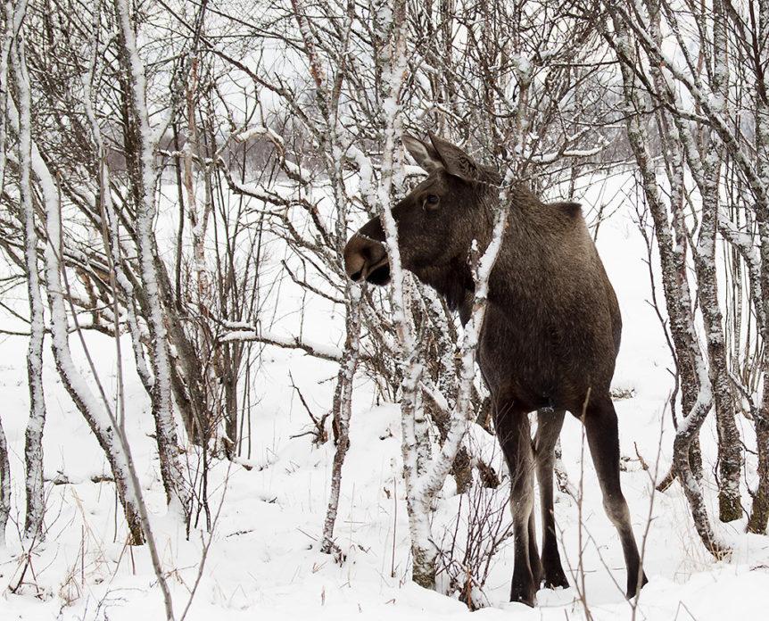 Moose hunting binoculars review
