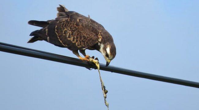 Use #2: Birding